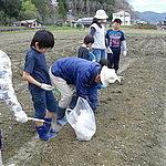 子供たちの体験ジャガイモ植え