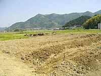 この畑、夏にはどうなっているでしょう。定点観測してみたいと思います。